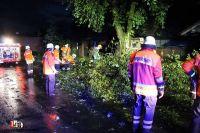 Bild 1 2016-06-24 TH1 BAum auf Fahrbahn Freetz Ortsmitte Quelle A. Schröder (Pressesprecher der Samtgemeinde-Feuerwehr Sittensen (2)